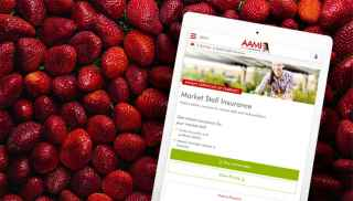 Smartphone with AAMI app open and strawberries in the background