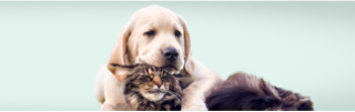 Pet Insurance - Dog and cat cuddling